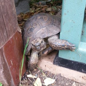 our nutty tortoise neighbour